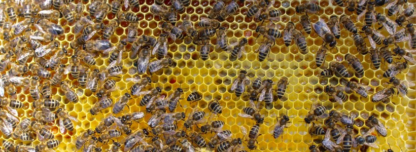 Five fave facts from reading honey bee research