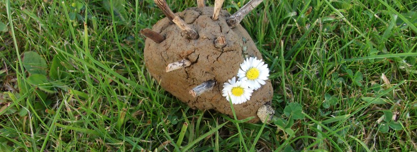 A hedgehog made from natural clay with sticks for spikes and daisies for eyes