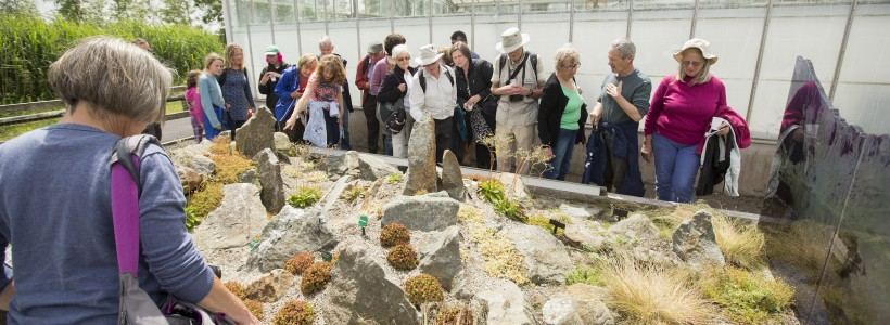Conserving Welsh Plants display