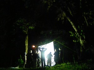 Moth trapping in Borneo