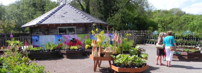 You'll find a fascinating range of plants in our  Garden Centre, Y Pot Blodyn