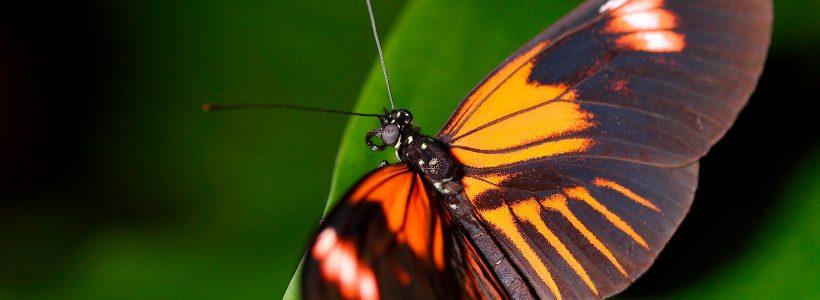 Butterfly House - Plas Pilipala