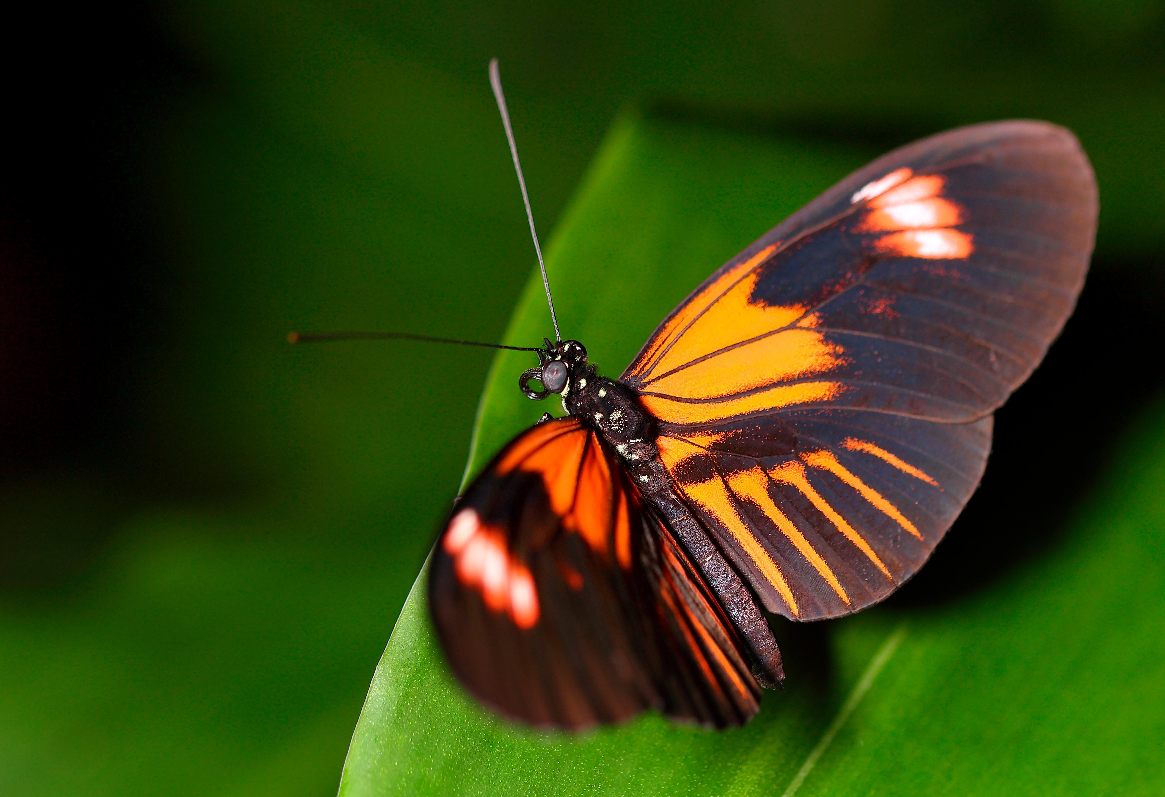 butterfly house plas pilipala national botanic garden of wales