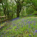springwoods
