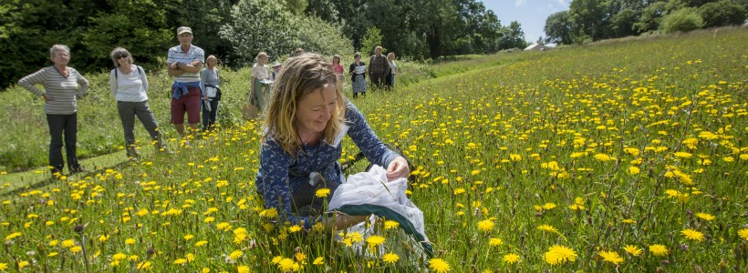 Bumblebee expert Clare Flynn on the Welsh Country Walk