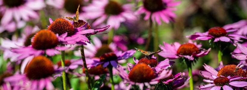 Apothecary's Garden