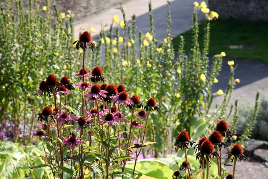 Apothecary\'s Garden | National Botanic Garden of Wales