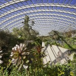 Great Glasshouse