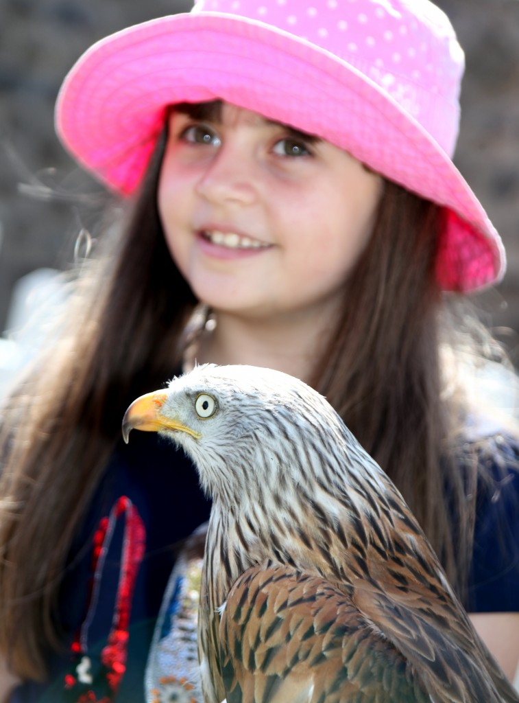 Pembrokeshire Falconry in action at the Garden with their Birds of Prey display