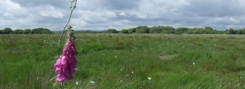 Mynydd Figyn