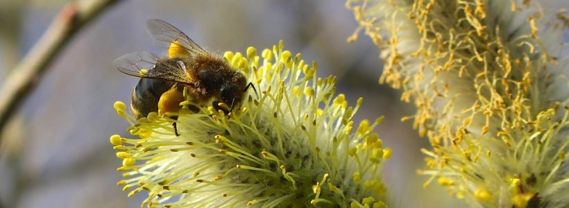 Honey bees like living close to the hedge – it's official!