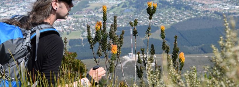 Free talks by international plant hunters