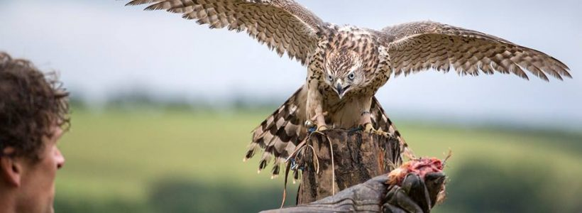 British Bird of Prey Centre - now open