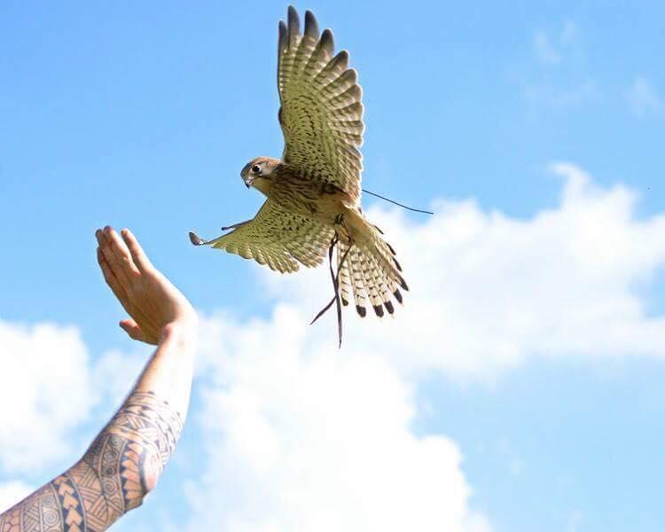 The British Bird Of Prey Centre