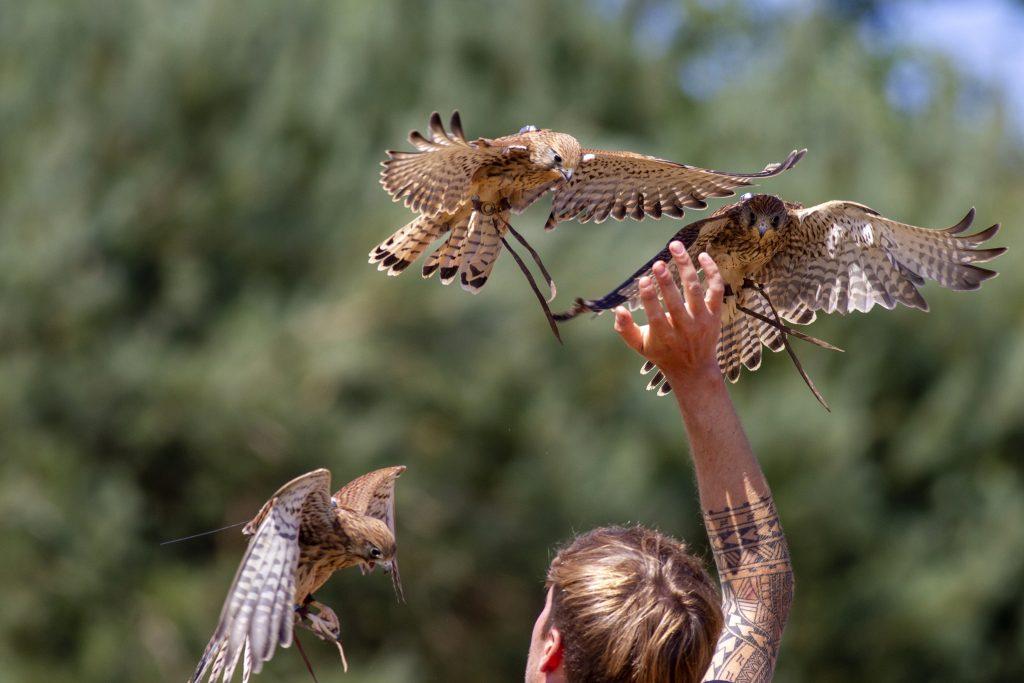 British Bird Of Prey Centre