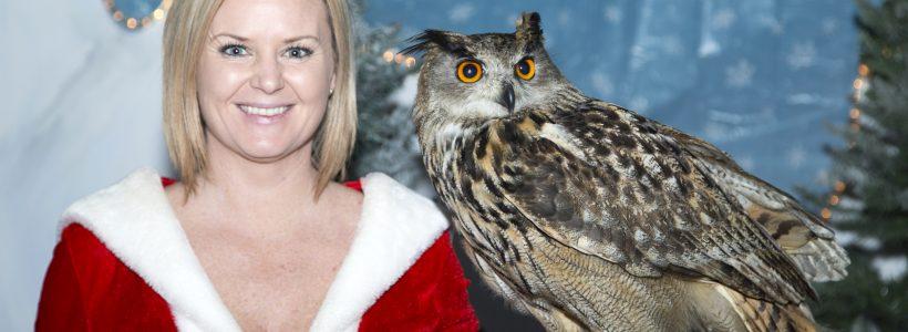 Christmas Owl Show