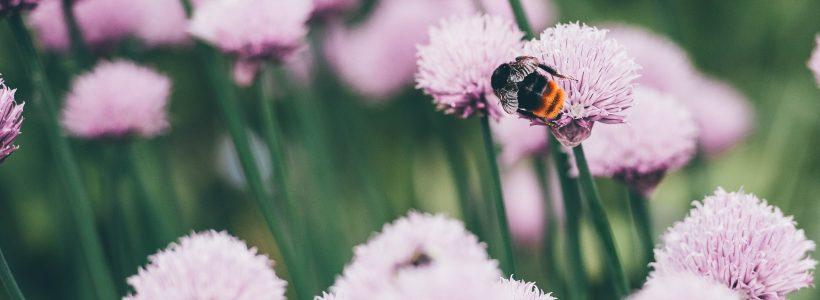 Pollinator Festival
