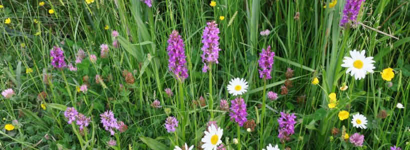 Make Your Lawn More Friendly for Wildlife