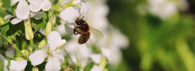 Bee Garden Update: What Has Happened to Spring?