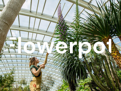 Flowerpot Podcast - The One with Will Ritchie